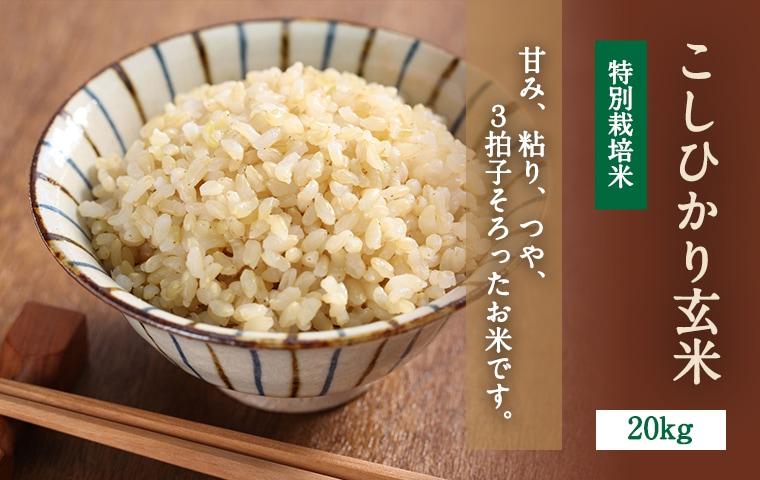 こしひかり玄米20kgメインイメージ
