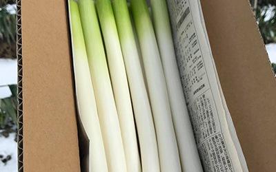 セット商品田中農場の白ネギ 2kg(約12〜20本)