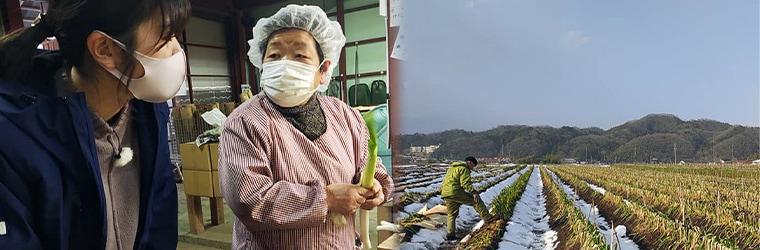 NCN日本海ケーブルネットワーク「まちネタ」にて鳥取・田中農場の極寒越冬白ねぎをご紹介いただきました!