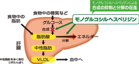 モノグルコシルヘスペリジンによる合成の抑制と分解の促進