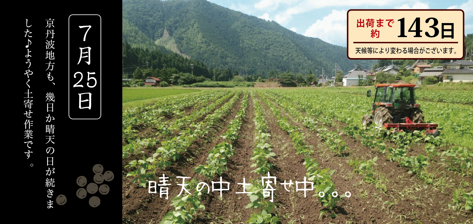 黒豆育成 8月
