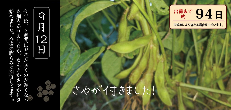 黒豆育成 9月