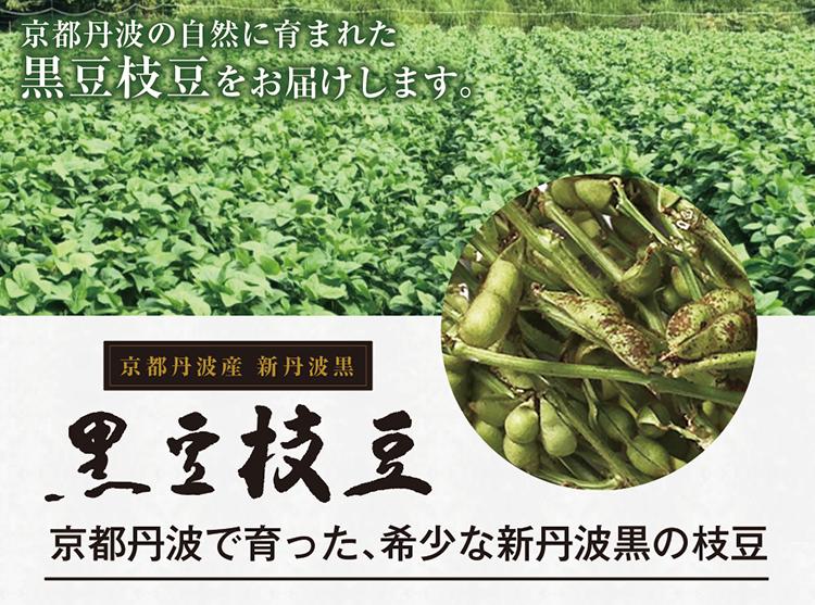 黒豆枝豆03