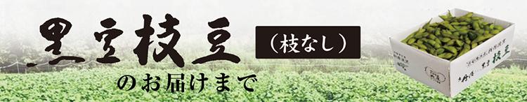 黒豆枝豆(枝無)