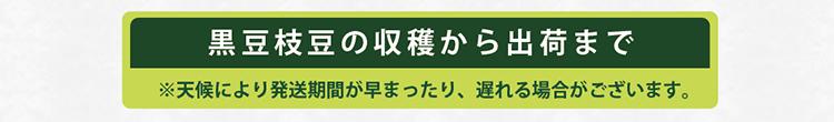 黒豆枝豆04