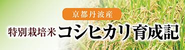 2021特別栽培米コシヒカリ育成