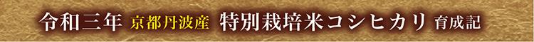 03コシヒカリ育成01