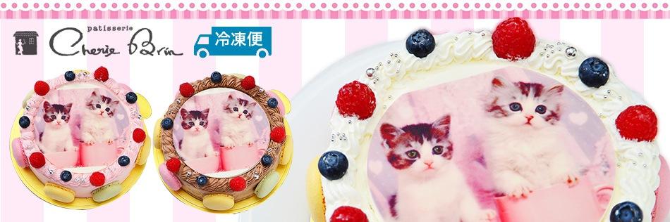 ペット用 写真ケーキ