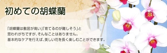 「胡蝶蘭は敷居が高い」「育てるのが難しそう」と思われがちですが、そんなことはありません。 基本的なケアを行えば、美しい花を長く楽しむことができます。