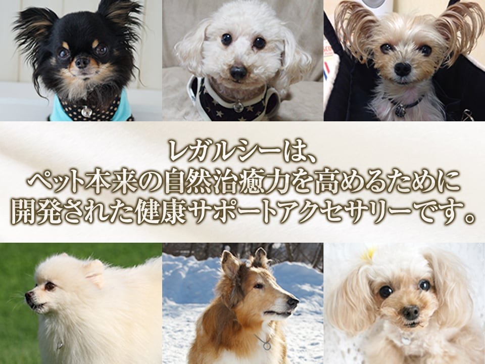 レガルシーは、ペット本来の自然治癒力を高めるために開発されたv健康サポートアクセサリーです。