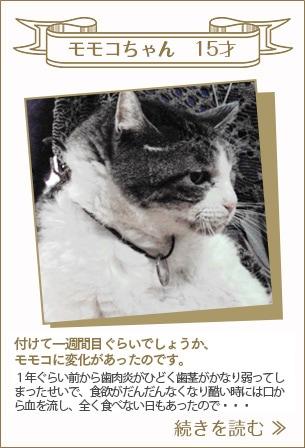 モモコちゃん 15才