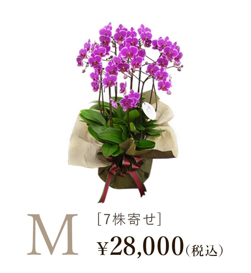 胡蝶蘭シェアオーキッド7株寄せMサイズの値段