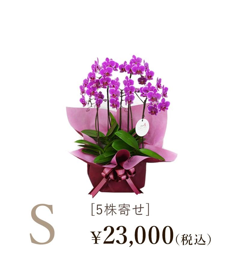 胡蝶蘭シェアオーキッド5株寄せSサイズの値段