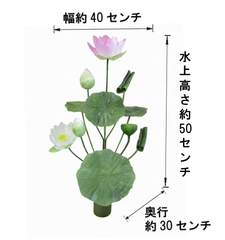 11本立て常花