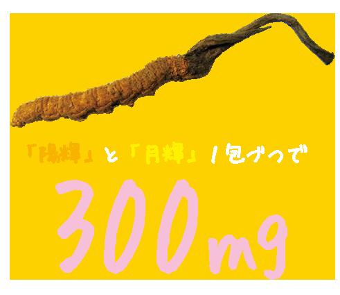 冬虫夏草エキス「陽揮」と「月揮」1包づつで300mg