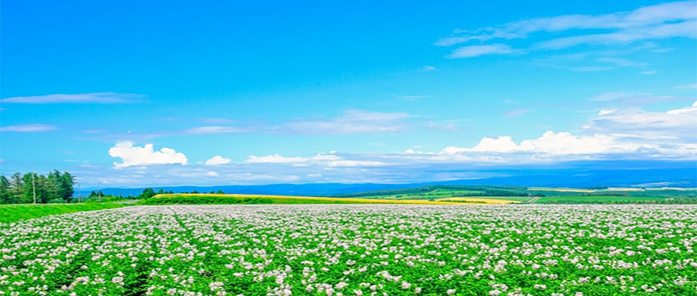北海道産小麦粉イメージ画像