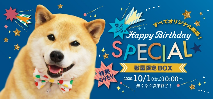 柴犬まるの Happy Birthday SPECIAL☆