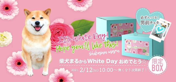 柴犬まるから White Day おめでとう☆