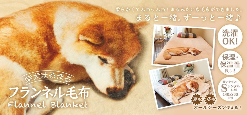柴犬まるまるフランネル毛布