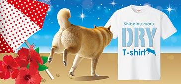 柴犬 ドライTシャツ