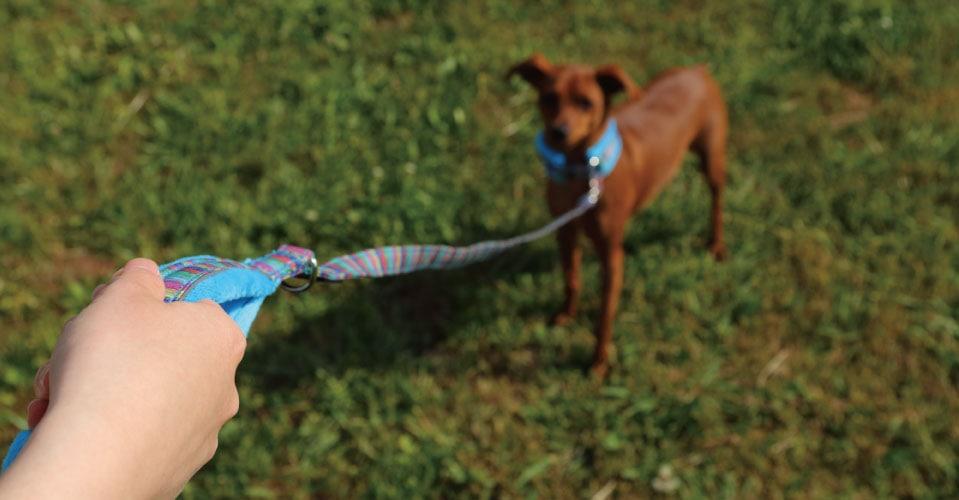 犬にも人にもやさしい首輪