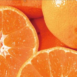 柑橘(かんきつ)