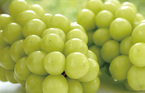 葡萄(ぶどう)