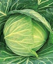 ジューシーグリーン種