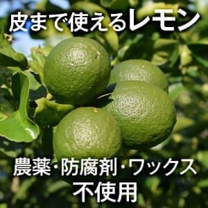 【無農薬】レモン