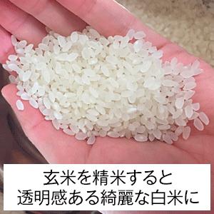 【完全無農薬】マスダのお米(新米)