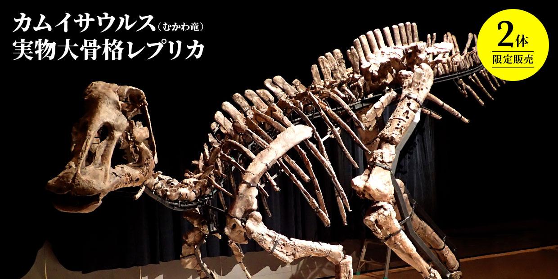 2体限定販売 カムイサウルス(むかわ竜) 実物大骨格