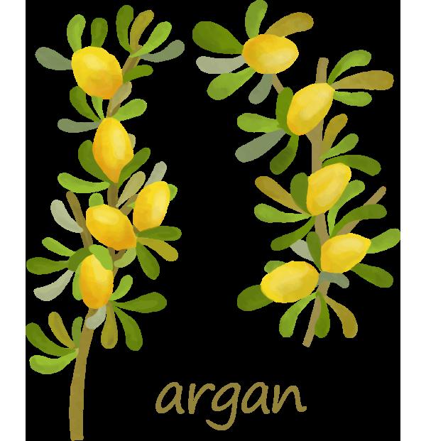 オーガニックオイル argan(アルガン)