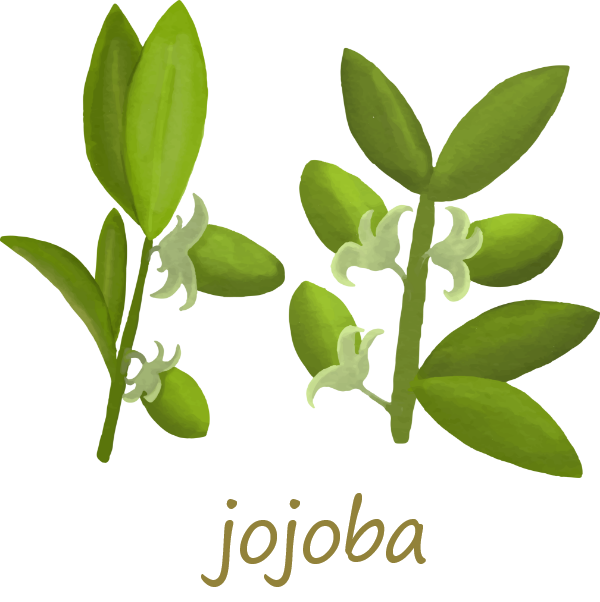 オーガニックオイル jojoba(ホホバ)