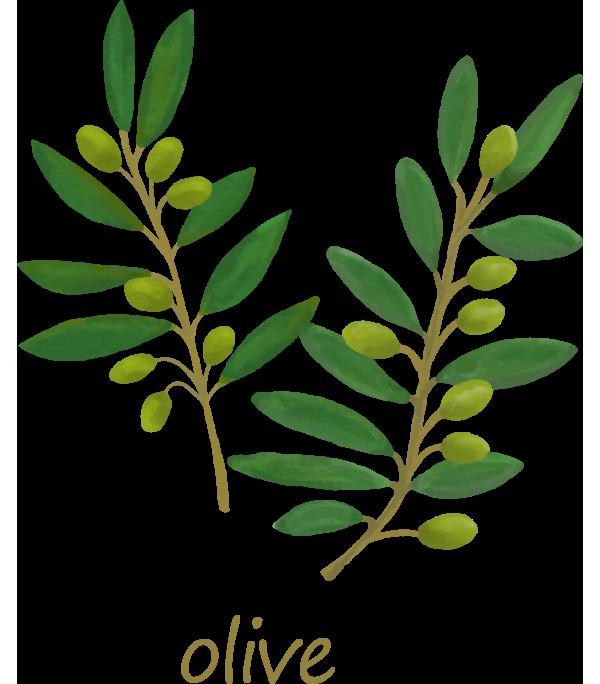 オーガニックオイル olive(オリーブ)