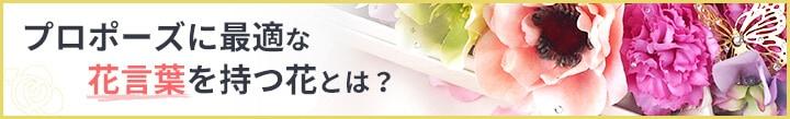 プロポーズに最適な花言葉を持つ花とは?