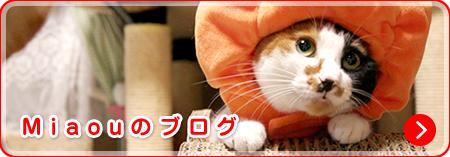 Miaouのブログ