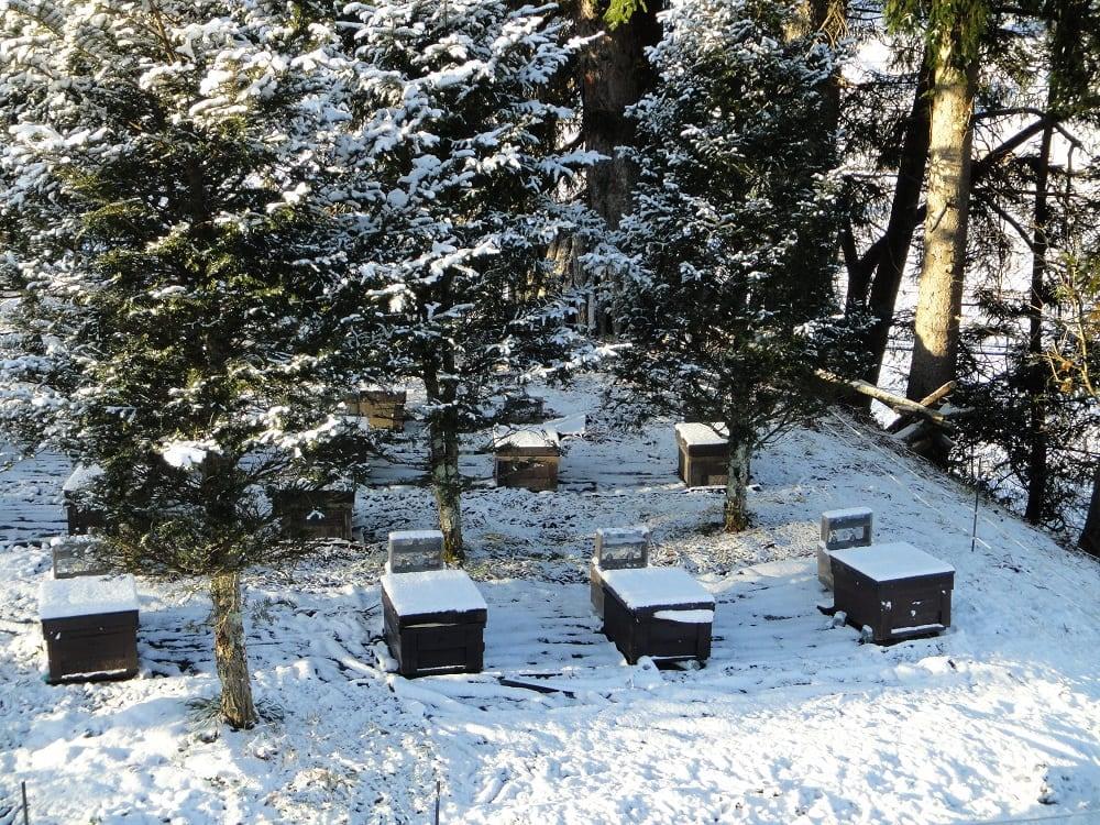 蜂場は雪に