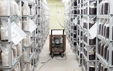 菌床が棚に並んでいる写真