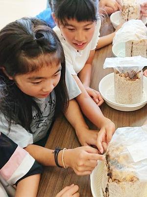 夏休みの食育の取り組みとして児童クラブできくらげ栽培