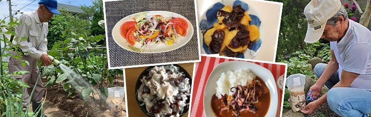 1日40gの新鮮な生きくらげを毎日食べるなら自分で栽培がオススメ!