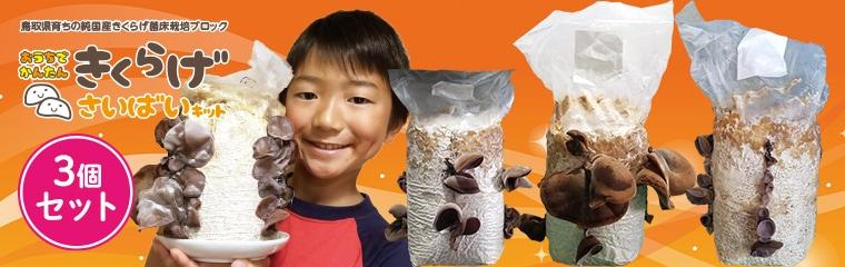 鳥取県 緑工房の純国産きくらげ菌床栽培ブロック おうちでかんたん きくらげ栽培キットVer.3 の3個セット