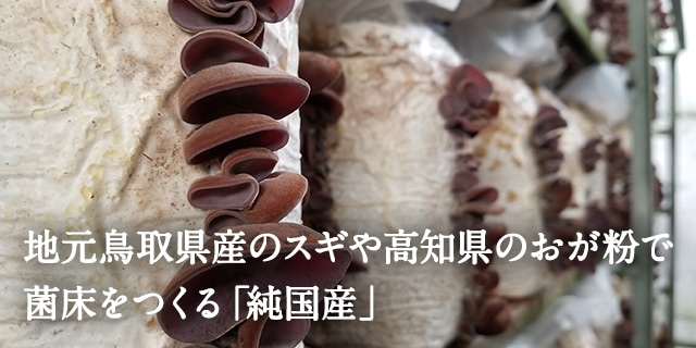 地元鳥取県産のスギや高知県のおが粉で菌床をつくる「純国産キクラゲ」