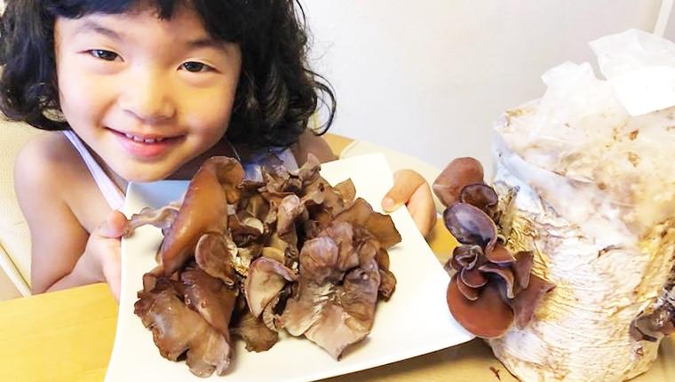 キクラゲの栄養価