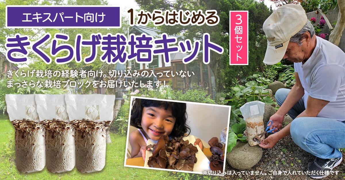鳥取県 緑工房の純国産きくらげ菌床栽培ブロック エキスパート向け 1からはじめるきくらげ栽培キット3個入りセット