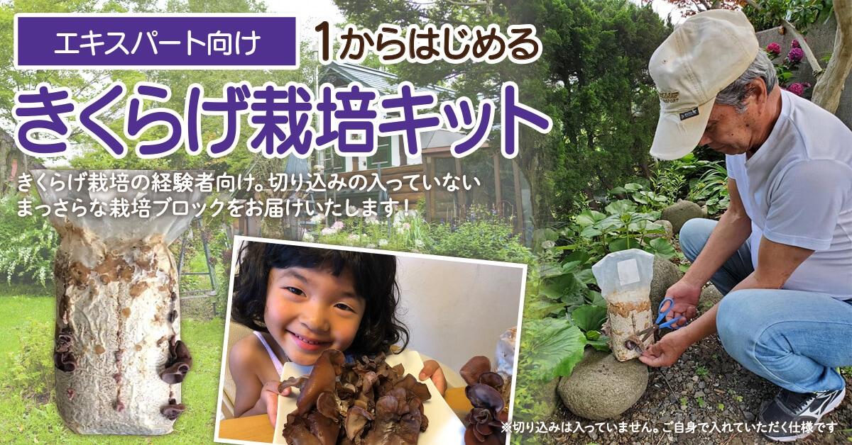 鳥取県 緑工房の純国産きくらげ菌床栽培ブロック エキスパート向け 1からはじめるきくらげ栽培キット