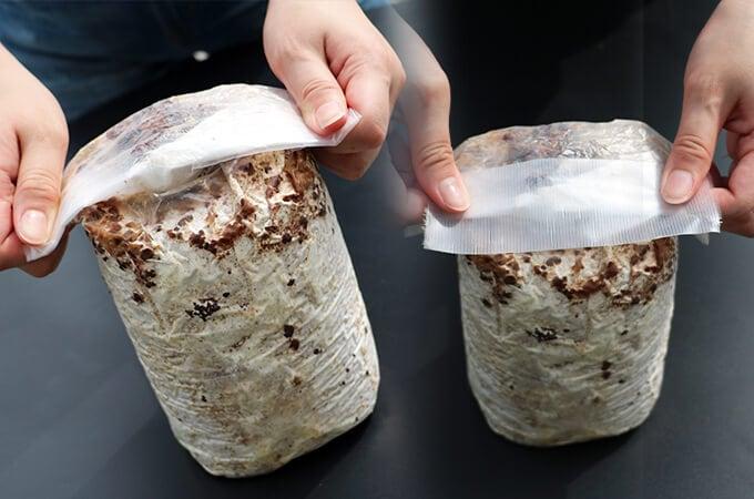 きくらげの栽培方法�栽培ブロックの空気を抜き上部をテープで止める