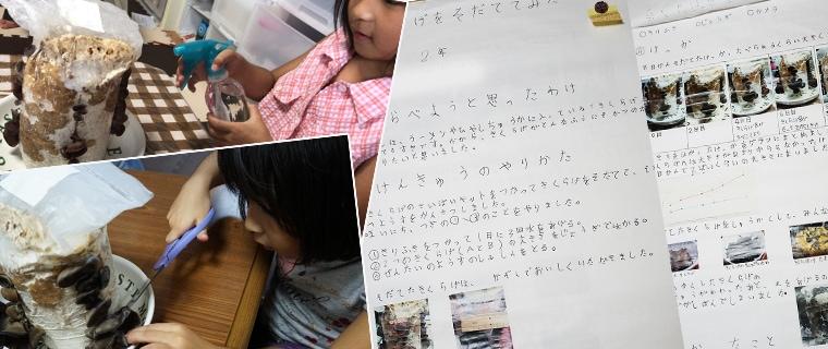 【自由研究】小学2年生 きくらげ栽培・観察 〜きくらげをそだててみた8日間〜