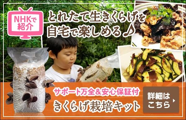 国産きくらげ栽培キット NHKおはよう日本「まちかど情報室」で紹介されました。自宅でとれたてキクラゲが楽しめる♪