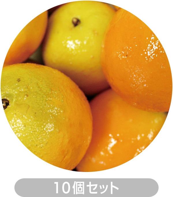 オレンジ10個セット