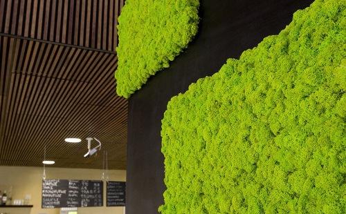 天然の苔をディスプレイに POLAR MOSS(ポーラーモス)
